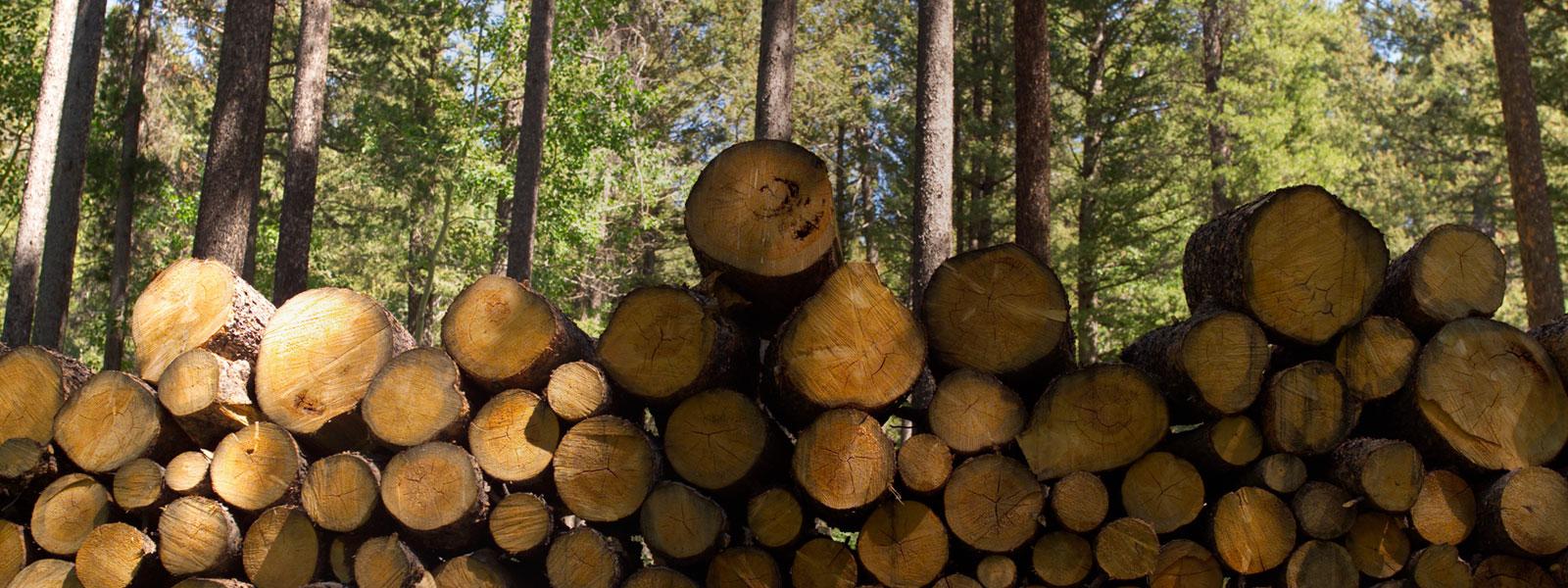 Acheter du bois et bois énergie