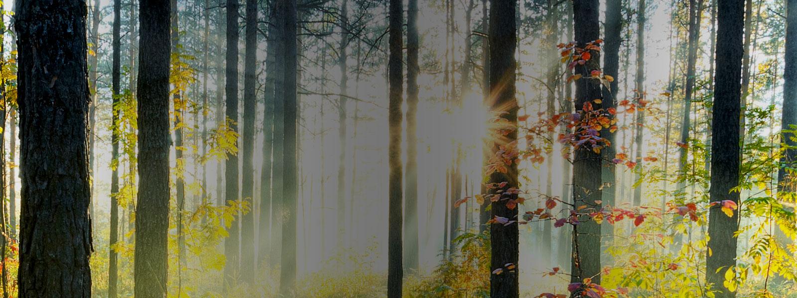 Investir en forêt