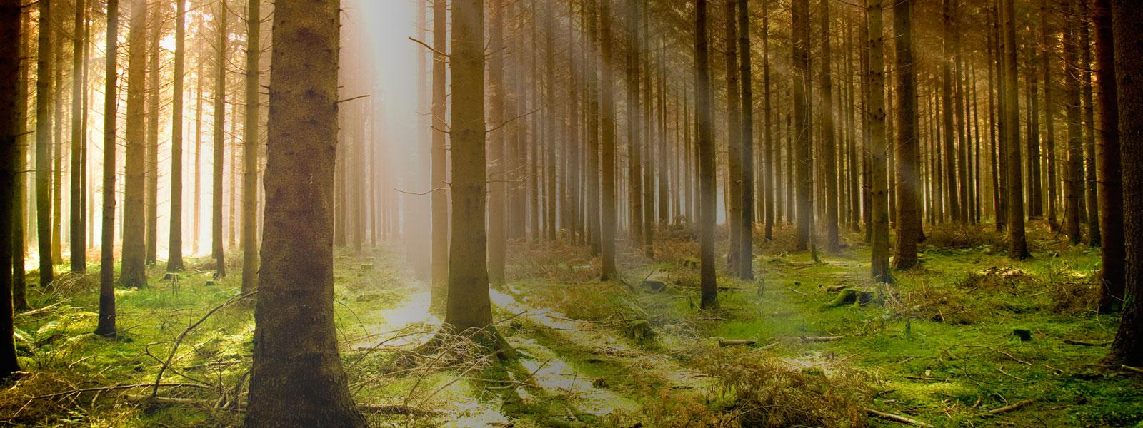 Vendre sa forêt