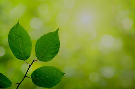 Agir pour une gestion durable de la forêt