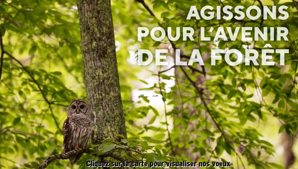 Vœux 2020 des Collaborateurs de la Société Forestière