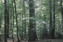 L'Indicateur 2017 du prix de vente des bois sur pied est disponible