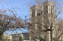 La Société Forestière participe à la reconstruction de la charpente de Notre Dame