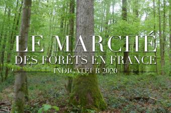 INDICATEUR MARCHE DES FORETS EN FRANCE 2020
