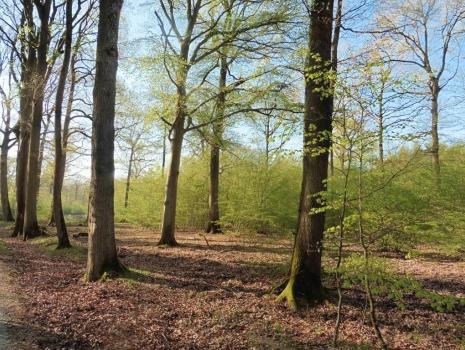 Propriété forestière de 641 hectares aménagée pour la chasse et l''agrément