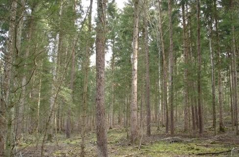 Peuplement forestier avec 28 ha de futaie des sapins-épicéas