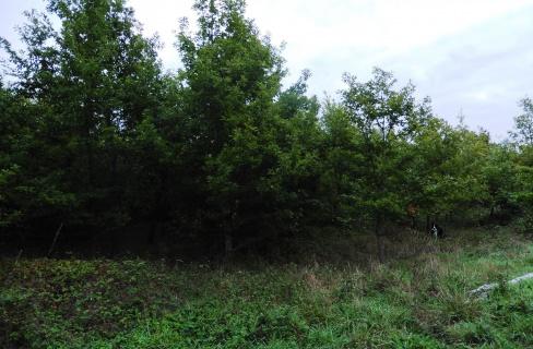 Parcelle forestière à dominance de chênes
