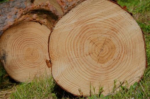 Acheter du bois