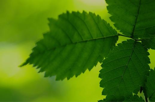 Acheter des parts de groupement forestier