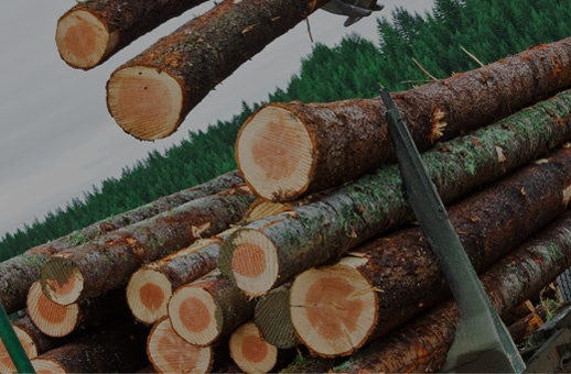 Gérer votre forêt